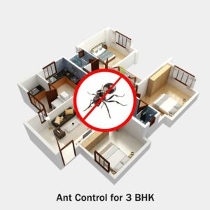 Ant Control Service for 3 BHK