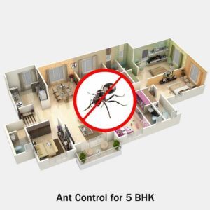 Ant Pest Control for 5 BHK