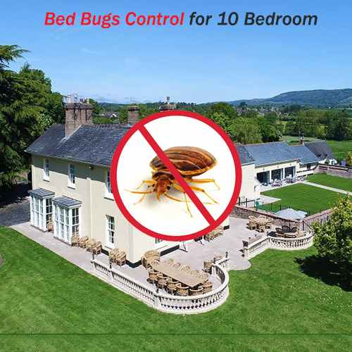 Bed Bugs Control For 10 Bedroom