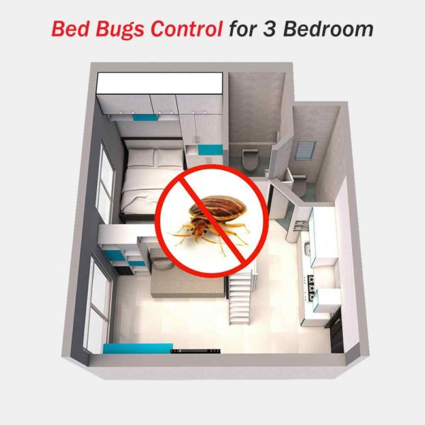 Bed Bugs Control For 3 Bedroom