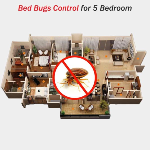 Bed Bugs Pest Control for 5 Bedroom