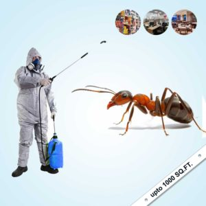 Ant Control for Villa