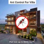 Ant Control Service For Villas At Hygienedunia