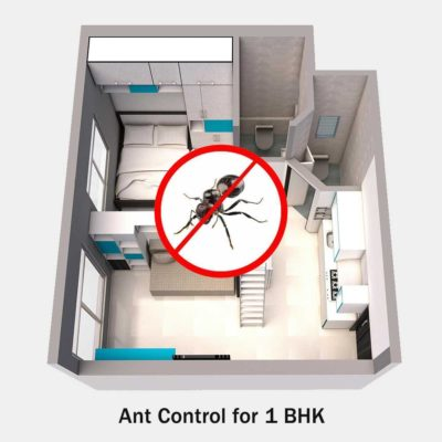 Ant Control Service for 1 BHK