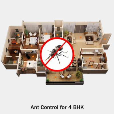 Ant Treatment Service for 4 BHK