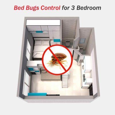 Bed Bug Removal and Pest Control