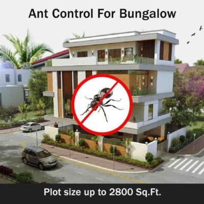 Secure Ant Control Services