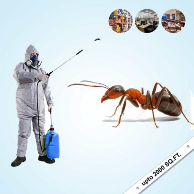 Ant Control Services in India