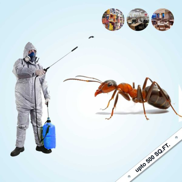 Ant's Complete Pest Control 2021
