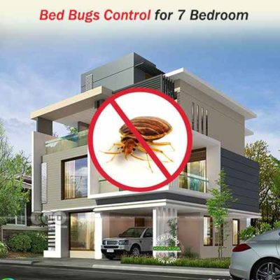 Professional Bed Bug Treatment