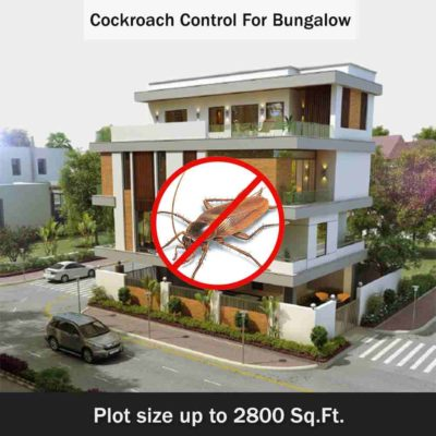 Cockroach Control for Bungalow