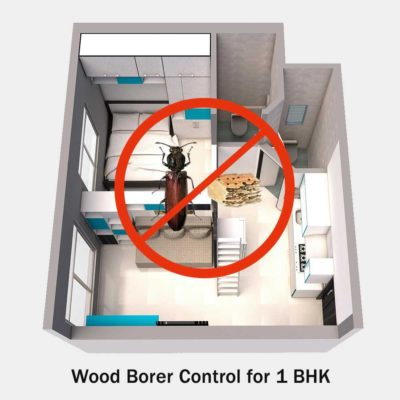 Wood Borers Control Services