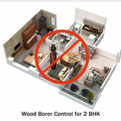 wood borer treatment