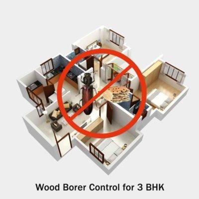 Wood Borer Control Service